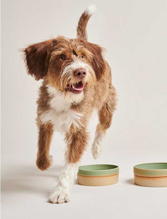 PAWNESS HANDMADE CERAMIC FOOD BOWLS BO FOR DOGS