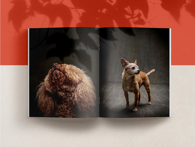 SPREAD OF THE BOOK THE YEAR OF THE DOGS