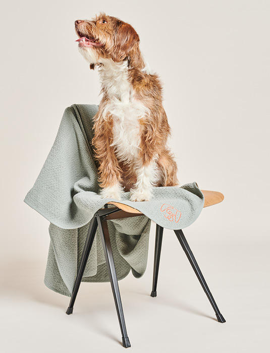 DOG ON CHAIR WITH BLANKET