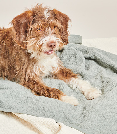DOG ON BLANKET