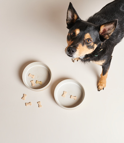 DOG WITH WHITE FOOD BOWLS